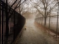 Foggy walk with the dog in Manhatten