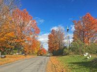 Fall foliage.1