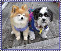 Two dear little friends.