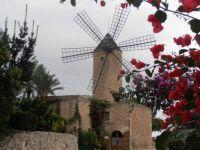 windmill with bouganvillea