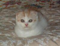 New kitten named Fife