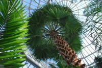 Como Conservatory palm room