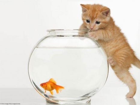 Fish + Kitten = Trouble