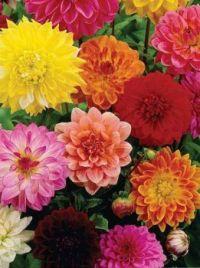 fresh flowers.jpg3