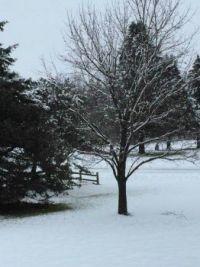First snowfall 2018