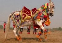 Indian  Festivals Chevaux