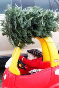 MY own car = my own tree!