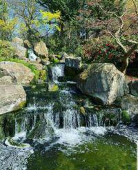 Kyoto Garden..Holland Park Garden.