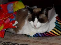 Trying to wrap herself up