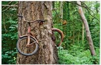 The Bike Tree