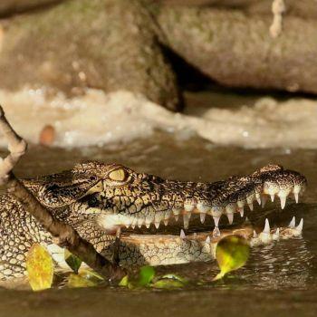 That Crocodile Smile