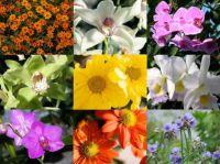 smaller flowers