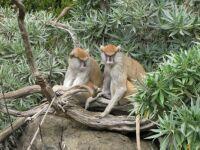 Zoo #10 -- Monkeys