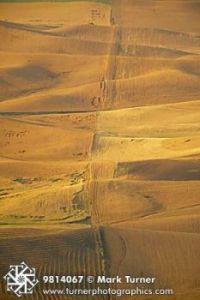Wheat fields off Steptoe Butte, Wa.