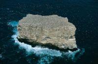 annet colony eldey island iceland Photograph by YANN ARTHUS BERTRAND