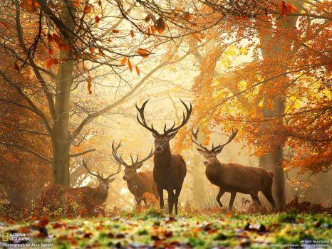 theme: fall deer