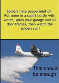 Bye spiders