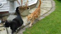 Sophie and Ferdy - having a brisk walk....
