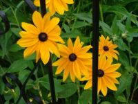 Susans behind bars