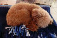 Maruxa dormindo
