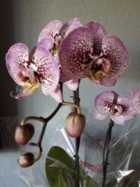 Detail of a special orchid