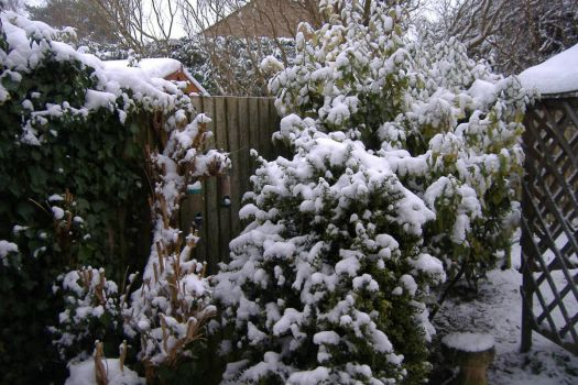 Snow - Garden Jan 2013 no.2