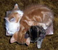 HOW MANY KITTIES CAN U FIT IN A TISSUE BOX?...