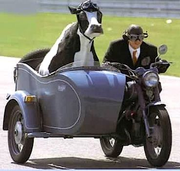 Write a Caption!  sidecar