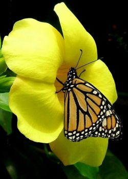 Beautiful Butterfly on a beautiful flower