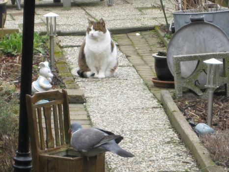 Goofie: It's not polite to watch a bird while he eats so I look the other way:))