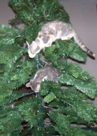 Tree is decorated with Twinkle and Stryder.
