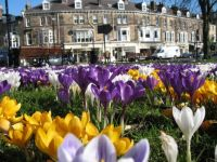 Crocuses in the park!!