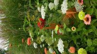 Blumenstrauß wächst im Garten