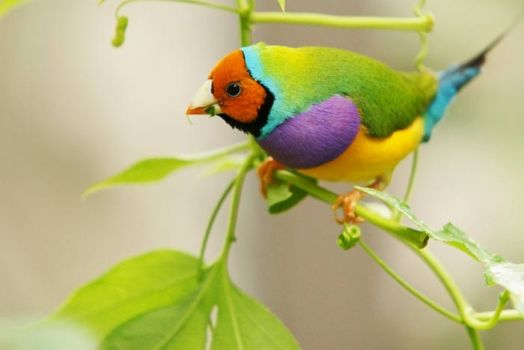 Bird of Many Colors