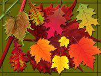 Theme :  Autumn Leaves