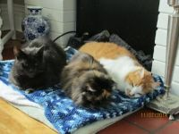 3 Old Cats