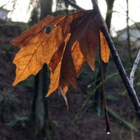 Fall Farewell