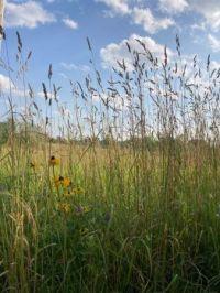 Meadow and Blue Skies