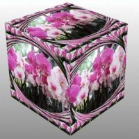 Orchideje v kostce...  Orchids in a cube...