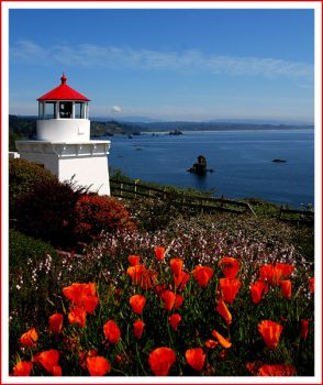 Lighthouse and poppies