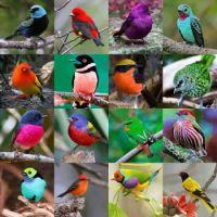 16 birds