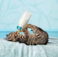 kitty 011913