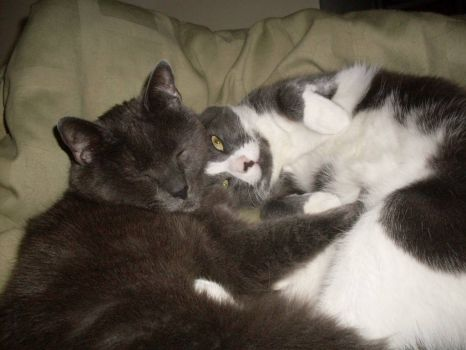 Cat Bromance -Mickey & Smudge