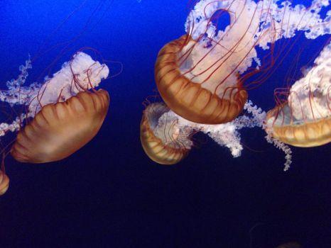 sea hornets.