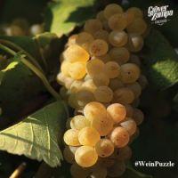 #WeinPuzzle - Grover Zampa (13)