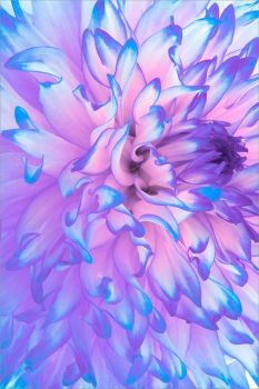 purple neon flower