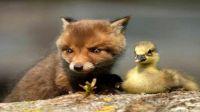 Dierenvriendschap