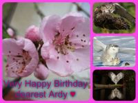 Happy Birthday dear Ardy   ( Ringleader) ♥♥♥