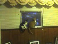 Simba and Dale