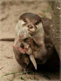 Mother Otter with her Baby